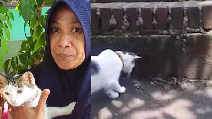 Video Kucing Peliharaan Bantu Usir Anak Ular Kobra Masuk ke Rumah Warga