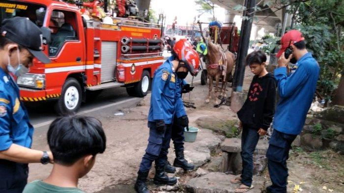 Kuda Masuk Got & Menindih Kawat Berduri di Jalan Pangeran Antasari, Petugas Hati-hati saat Evakuasi
