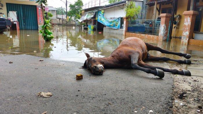 Seekor Kuda Mati Tenggelam Akibat Terobos Banjir, Sang Kusir Pingsan di Kayu Gede Serpong Utara