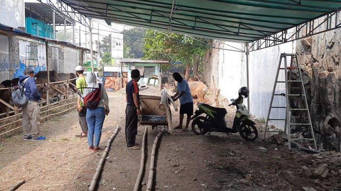 MUI Kota Bekasi Imbau, Pemotongan Hewan Kurban Dilakukan di Tempat Tertutup
