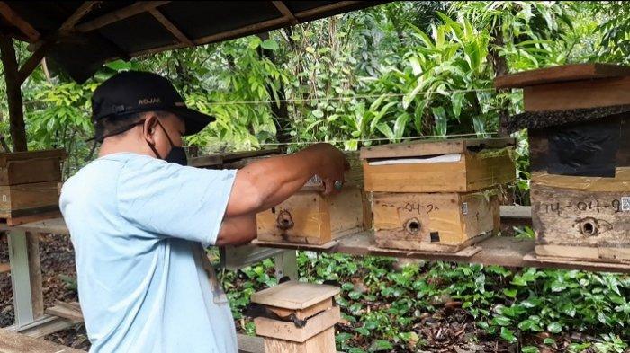 Pengunjung bisa melihat dan belajar secara langsung mengenai kegiatan budidaya lebah madu, serta merasakan sensasi menyeruput madu segar langsung dari sarangnya di Hutan Kota Srengseng