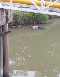Mayat Pria Mengambang di Sungai Cisadane Kota Tangerang Diduga Korban Terpeleset