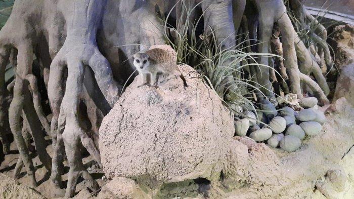Datang Ke Jakarta Aquarium, Jangan Lupa Lihat Hewan Ini
