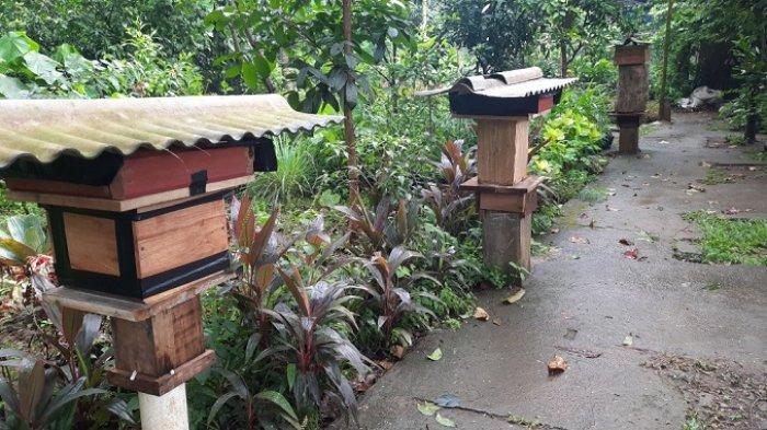 Di Hutan Kota Srengseng, pengunjung bisa melihat dan belajar secara langsung mengenai kegiatan budidaya lebah madu, serta merasakan sensasi menyeruput madu segar langsung dari sarangnya.