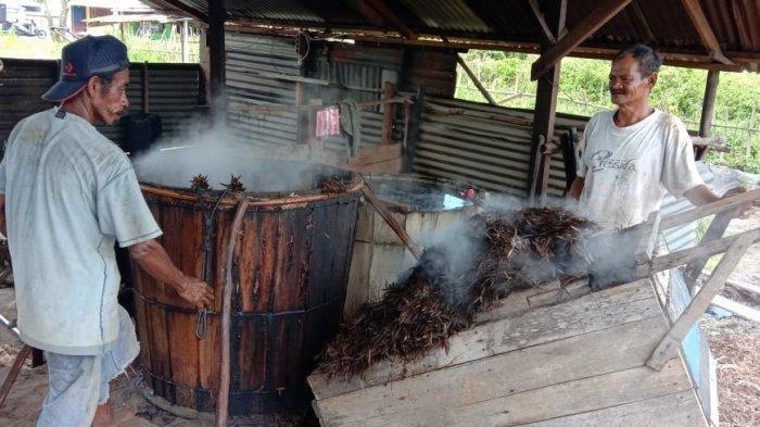 Minyak Kayu Putih asal Pulau Buru Diburu Masyarakat, Dipercaya Jadi Obat Penangkal Corona