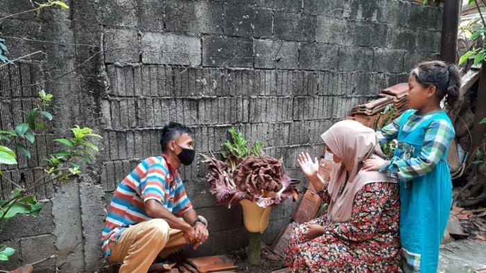 Tumbuhan Mirip Bunga Bangkai Mekar di Cipete Selatan, Warga Penasaran Lihat dari Dekat