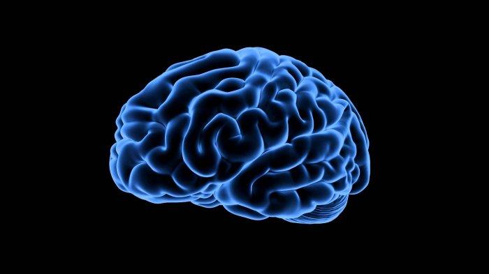 Rasakan Mati Rasa di Sisi Kiri Tubuh, Pria Ini Tak Sadar Ada Cacing Pita 12 Cm Bersemayam di Otaknya