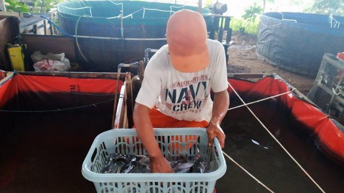 Warga dan PPSU Cipinang Melayu Nikmati Hasil Panen Lele di Kolong Tol Becakayu