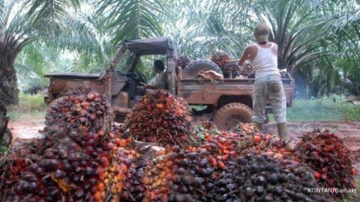 Indonesia Dinilai Perlu Membuat Langkah Afirmatif Untuk Memerdekakan Petani Sawit