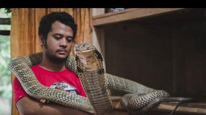 Panji Petualang Ungkap Kondisinya Setelah Digigit King Kobra, Ayu Ting Ting & Wendy Cagur Kengerian