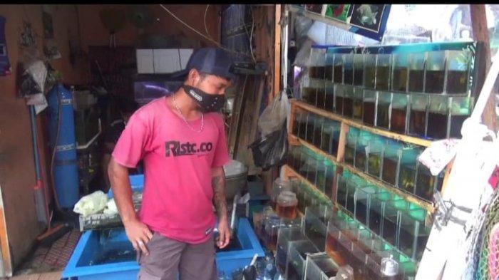 Banyak Diburu Masyarakat, Pedagang Ikan Cupang di Jatinegara Alami Kenaikan Omset