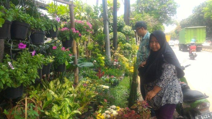 Omset Turun 50 Persen Pedagang Tanaman Hias Di Jalan Danau Sunter Ingin Masa Jayanya Kembali Tribun Jakarta