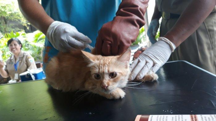 Garda Satwa Indonesia: Razia Kucing dan Anjing Liar Bukan Solusi Jakarta Bebas dari Rabies