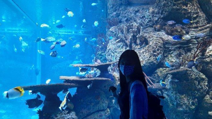 Pengunjung Bisa Lihat Pengibaran Bendera Oleh Satwa Jika ke Jakarta Aquarium Tanggal 17 Agustus