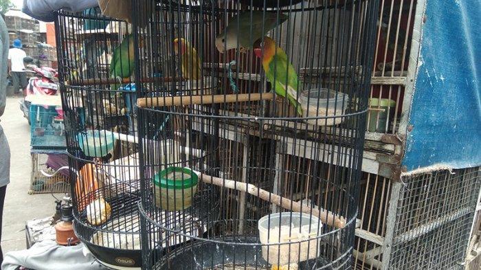 Harga Love Bird Jadi Murah di Pasar Hewan Jatinegara