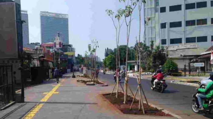 Hijaukan Ibu Kota, Pemprov DKI Jakarta Tanam Puluhan Ribu Pohon dan Jutaan Semak