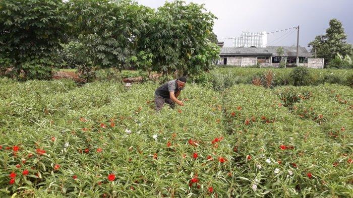 Yuk Apresiasi Jasa Petani Lewat Beli Produk Lokal, Gak Kalah Keren Kualitasnya