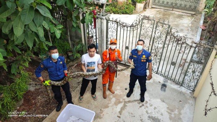 Ditinggal Mudik, Rumah Warga di Cipete Selatan Kemasukan Ular: Damkar Turun Tangan