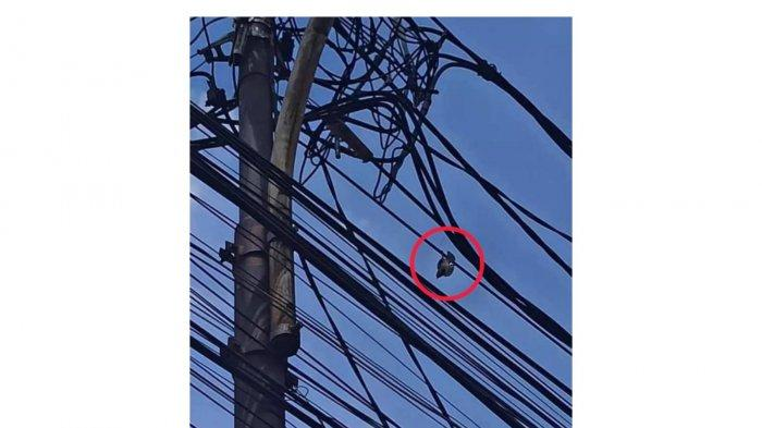 Anies Posting Momen Damkar Selamatkan Burung Gereja Tersangkut di Tiang, Jakfire Beri Balasan