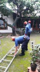 Petugas Pemadam Kebakaran Evakuasi Kucing yang Terjebak Dua Hari dari Pohon Rambutan di Duren Sawit
