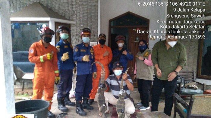 Dua Ekor Biawak Bersarang di Eternit, Pemilik Rumah Resah Hingga Lapor Petugas Damkar