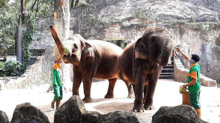 Taman Margasatwa Ragunan Tutup Hari Pertama Lebaran 2021