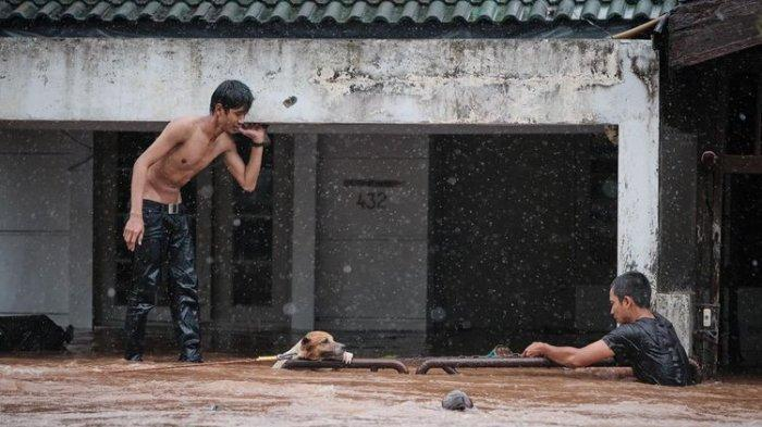 Viral Kisah Penyelamatan Seekor Anjing Terikat Bertahan di Diterjang Banjir & Kuda Mati Tenggelam