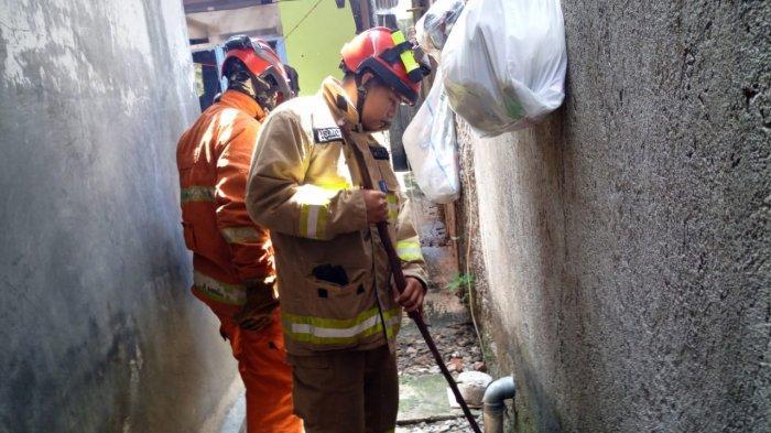 Petugas Pemadam Kebakaran Amankan 9 Anak Ular Kobra dari Permukiman Warga Kelurahan Rambutan