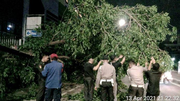 Jakarta Pusat Diguyur Hujan Deras, Pohon Besar Tumbang Menimpa Kabel Listrik