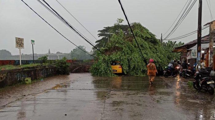 Pohon beringin besar tumbang di Jalan Pajajaran, dekat Situ Sasak Tinggi, Pamulang, Kamis (6/5/2021).