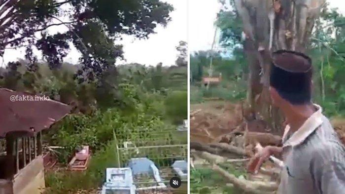 Viral Pohon Besar di Tengah Kuburan Berdiri Lagi Usai Ditebang, Begini Reaksi Orang Disekitarnya