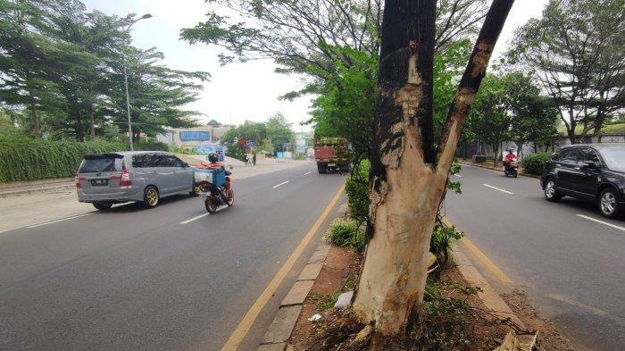 Gegara Pohon Rindang, Kecelakaan Kerap Terjadi di Jalan Juanda Depok, Ini Musababnya