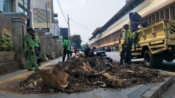 Jelang Musim Hujan, Dinas Lingkungan Hidup Tangerang Selatan Tebang Pohon Tua