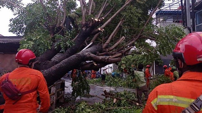 Pohon Tumbang Sampai Menutup Jalan di Tebet, Lalu Lintas Dialihkan