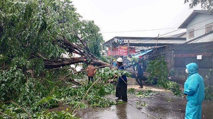 Pohon Tumbang dan Banjir Terjadi di Kota Bekasi Imbas Hujan Deras