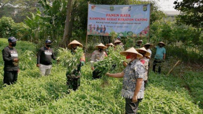 Jaga Ketahanan Pangan, Polisi Panen di Banksasuci Kota Tangerang