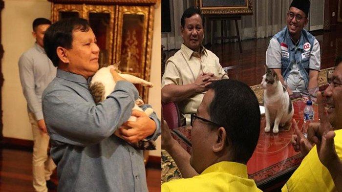 Kucing Prabowo Punya Akun Instagram, Diikuti Ribuan Orang hingga Kerap Unggah Kalimat Motivasi