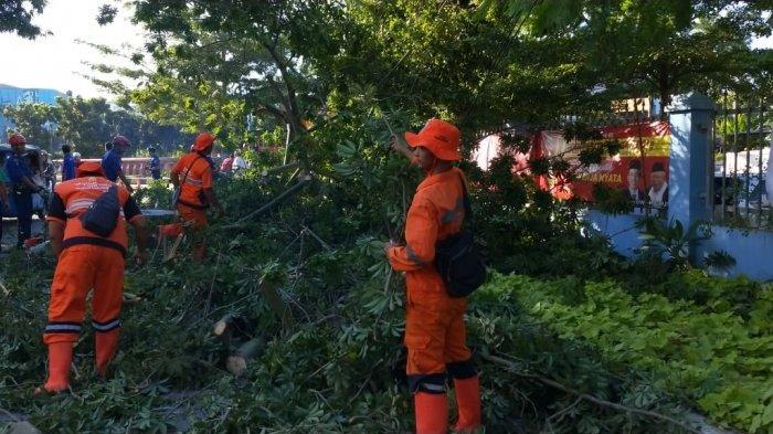 Akar Keropos, Pohon Tumbang Timpa 2 Pengemudi Ojek Online hingga Kakinya Patah di Sawah Besar