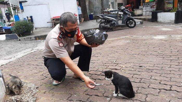 Aksi Terpuji Polisi di Jakarta Timur Kasih Makan Kucing Liar, Rutin Bawa Berobat ke Klinik Hewan