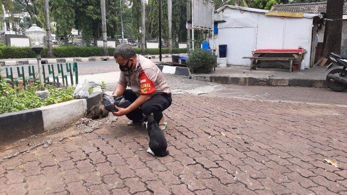 Kapospol Pondok Kopi, Aiptu Ridwan Simanungkalit saat dihampiri sejumlah kucing dan memberi mereka makan di depan Pospol Pondok Kopi, Duren Sawit, Jakarta Timur