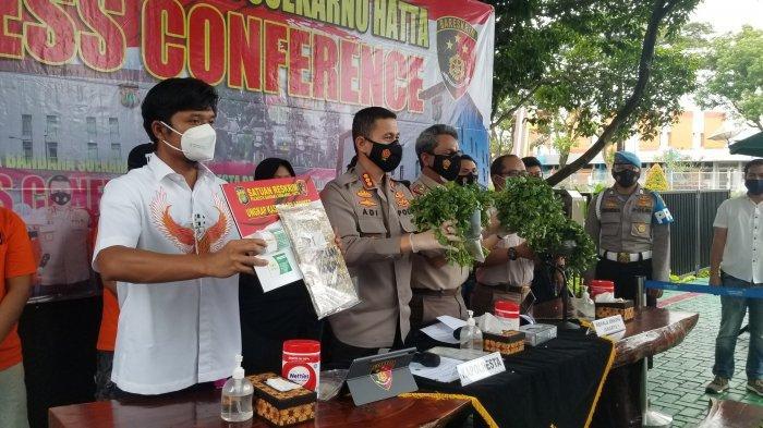72 Ribu Benih Lobster Ilegal Diamankan di Bandara Soekarno-Hatta, Senilai Rp 7 Miliar