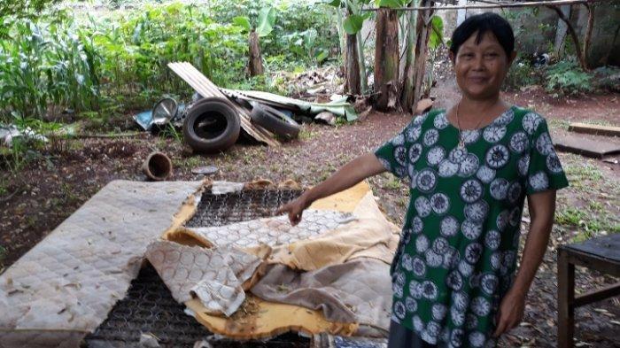 Wanita 60 Tahun di Pamulang Kaget Temukan Ular Sanca 3 Meter di Dalam Kasurnya