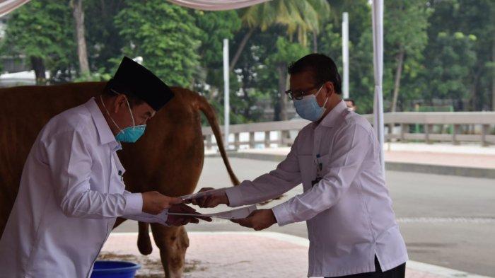 Presiden Joko Widodo (Jokowi) menyalurkan seekor sapi jenis Limosin seberat 1,19 ton ke Masjid Istiqlal Jakarta, dalam rangka Hari Raya Idul Adha 1442 Hijriah