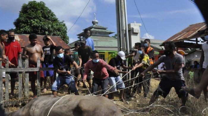 Bantu Warga Korban Terdampak Pandemi di Hari Raya Iduladha, PT SRM Serahkan Sapi Kurban 500 Kg