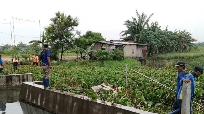 Antisipasi Banjir, Sistem Irigasi Pertanian di Kelurahan Marunda dan Kelurahan Rorotan Dibenahi