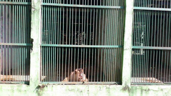 Taman Margasatwa Ragunan Buka 20 Juni 2020, Sementara Pusat Primata Schmutzer Masih Ditutup