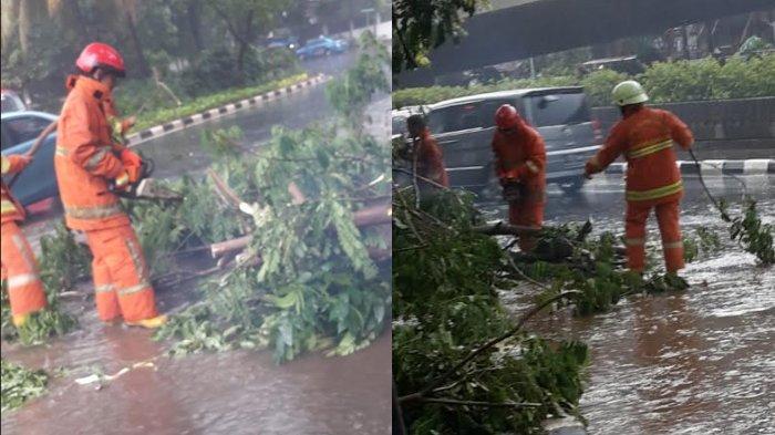 Hujan Deras, Pohon Angsana di Jalan Prapanca Tumbang