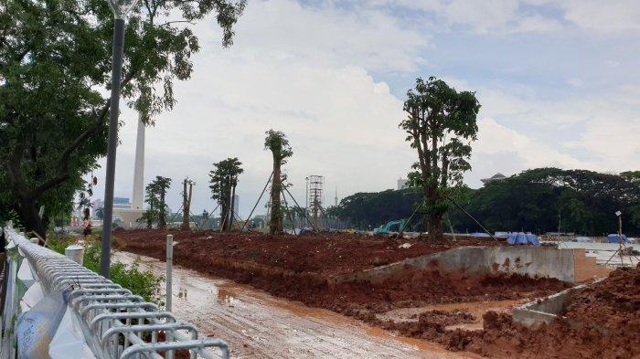 Pohon Pule Gantikan Mahoni di Monas, Pemprov DKI : Ini Harganya Jauh Lebih Mahal