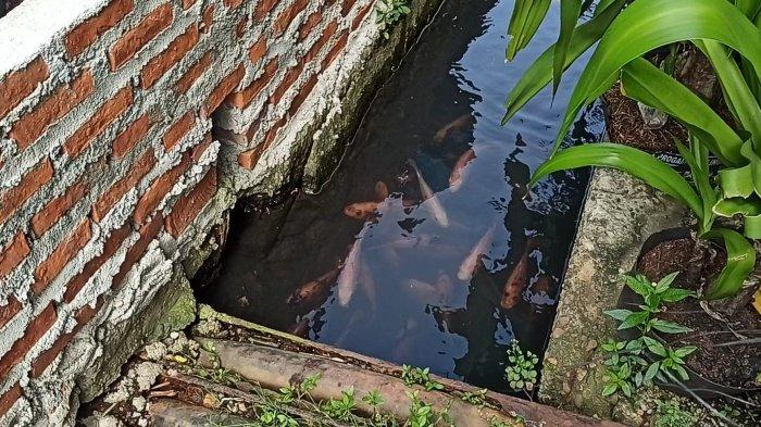 Sebelum Jadi Tempat Pemeliharaan Ikan Air Tawar, Selokan di Koja Ini Kotor dan Penuh Sampah