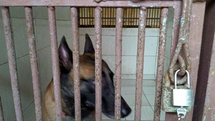 Jika Positif Rabies, Anjing Milik Presenter Bima Aryo akan Mati dalam 14 Hari
